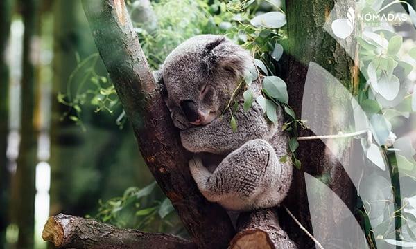 Santuario de animales en Brisbane