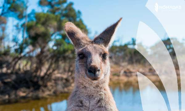 Vivir en Australia 2021