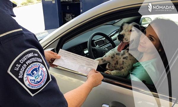 Viajar a Canadá con tu mascota - Certificado de la rabia