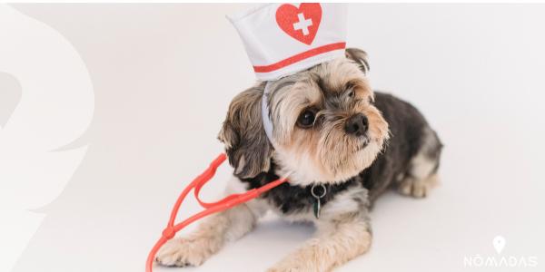 Mejores trabajos para Canadá: veterinario